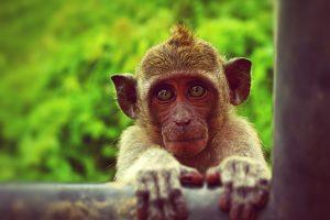 Don't pet that monkey! Oder: Was du über Tollwut wissen solltest