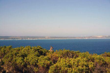 Melbourne to Adelaide – wildlife & wine/ Part 2