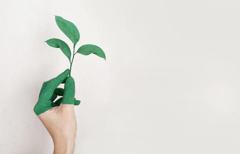 Nachhaltiges Wording Texterin Nachhaltige Unternehmen Texter Webtext