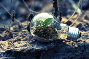29 Tipps, mit denen dein Unternehmen ein bisschen nachhaltiger wird